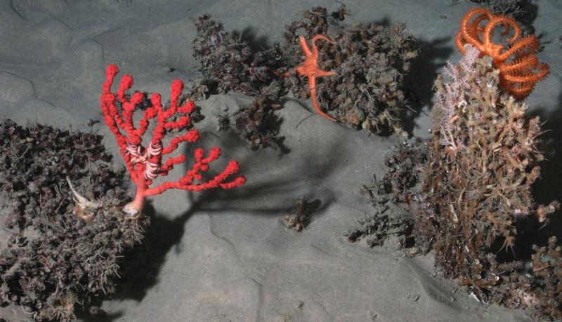 noi-specii-descoperite-in-atlantic