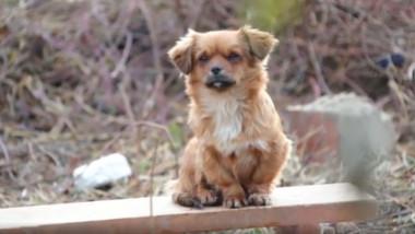 Câinii încă își așteaptă stăpânii lângă casele prăbușite după cutremurele din Croația.