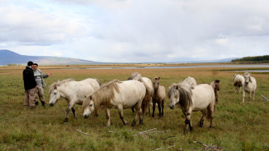Ancient animals to be cloned in Yakutia