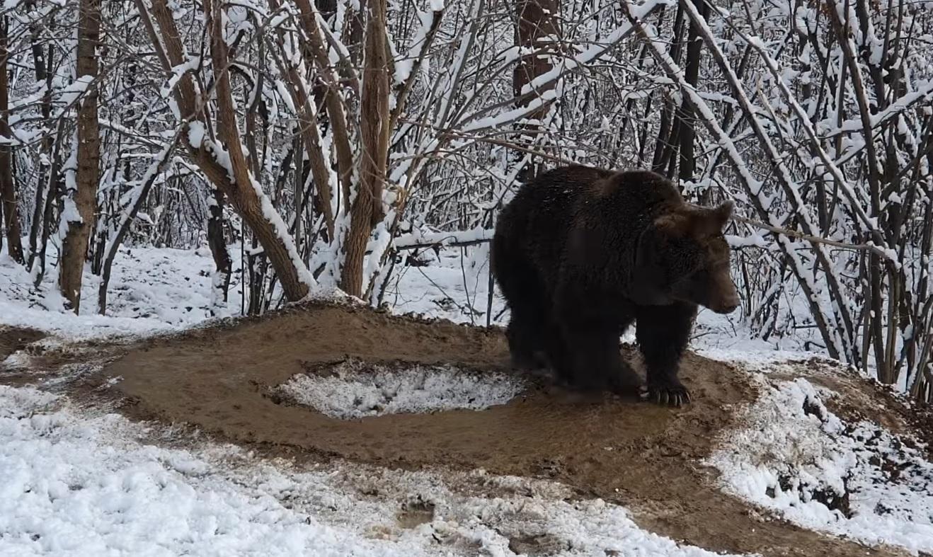imaginea-traumei-unui-urs-care-a-fost-captiv-la-zoo-piatra-neami
