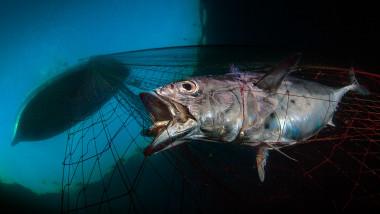 Salvarea oceanelor