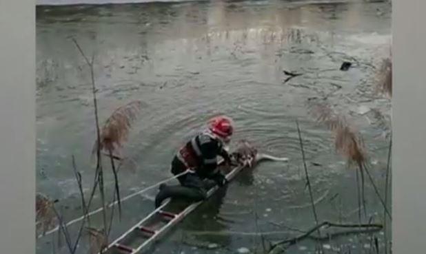 VIDEO. Catel salvat de pompieri din apele inghetate ale raului Tarnava