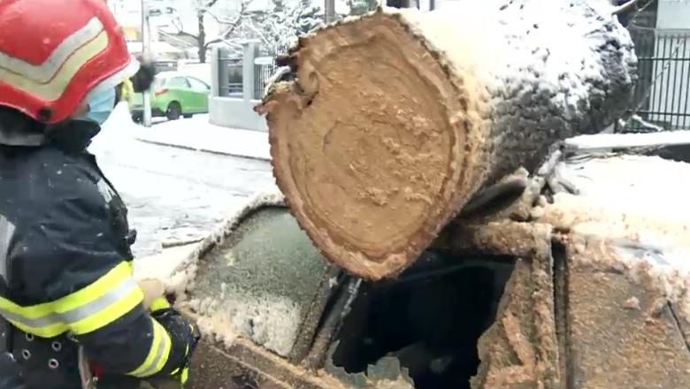Un copac a căzut peste o mașină în București