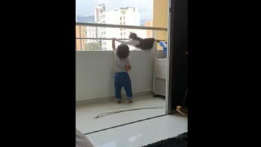 pisica salvatoare