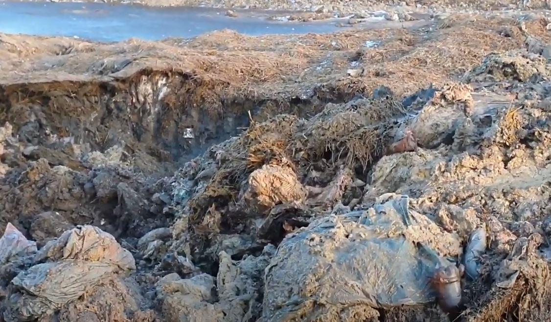 Dezastru ecologic. Procurorii verifica daca miile de oi inecate in Marea Neagra au fost incinerate. Lesuri ingropate, gasite pe un camp