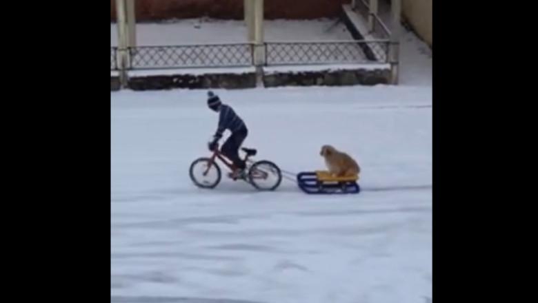 Un copil își plimbă câinele cu sania trasă de bicicletă