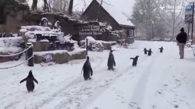 pinguini la plimbare st louis