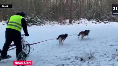curse sanii trase de caini