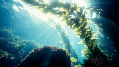 Ar putea exista un remediu contra Covid-19 pe fundul oceanelor?
