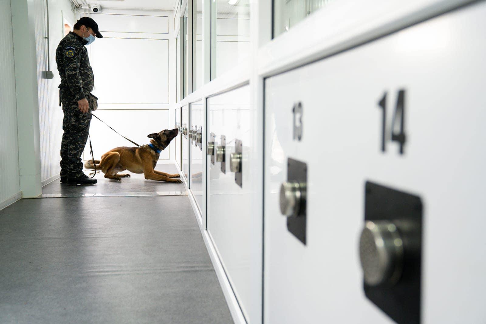 Persoanele care ajung în aeroportul Sibiu, verificate de câini dresați să depisteze infecția cu COVID