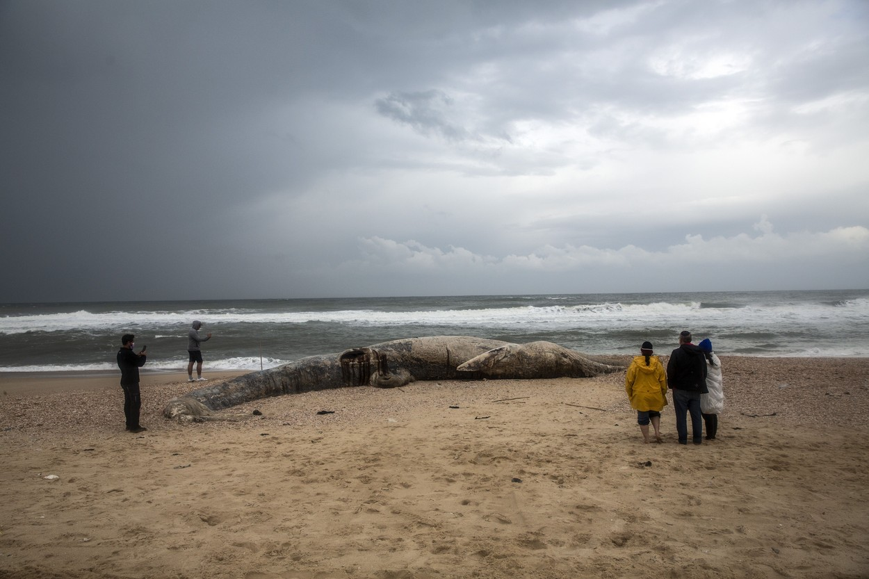 Dead Fin Whale Washed Ashore Israel Coast