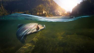 """Peştii de apă dulce sunt în declin """"catastrofal"""""""
