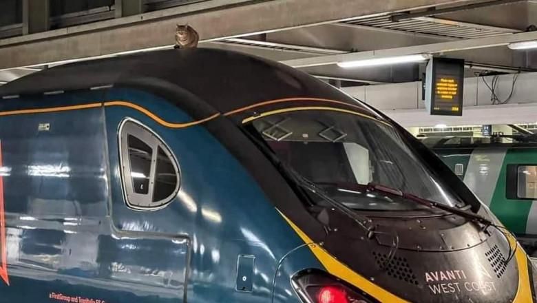 pisica pe tren