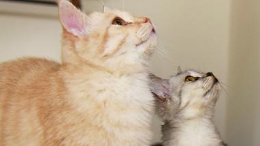 pisici profimedia