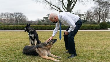 Președintele Biden și câinii săi