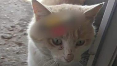 pisica injunghiata 2