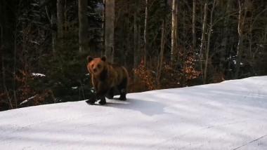 urs-pe-partie-1