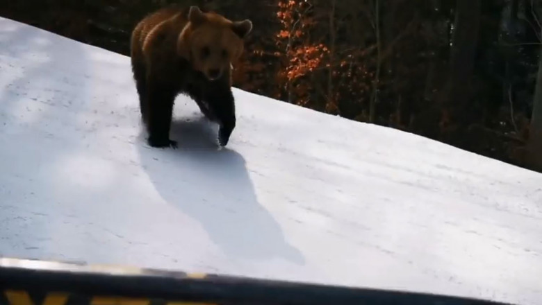 urs-partie
