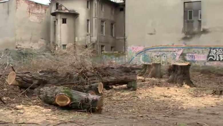 pomi copaci taiati bucuresti