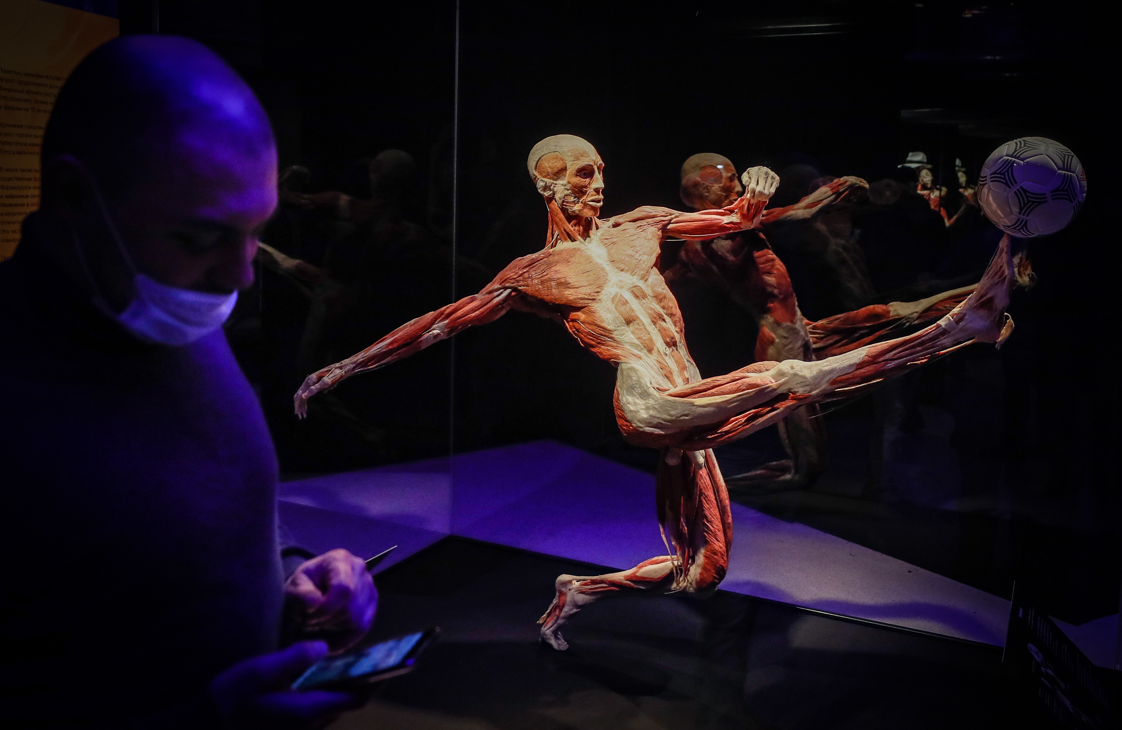 The exhibition Body Worlds in Moscow