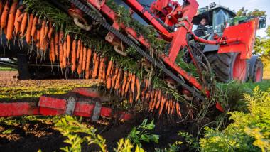 plantatie organica de morcovi germania