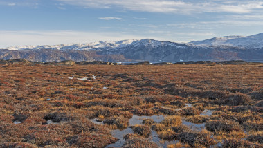 Tundra Wetlands in the High Arctic