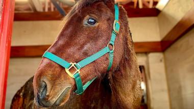Bruno, calul incendiat de un bărbat din Ilfov, a fost eutanasiat