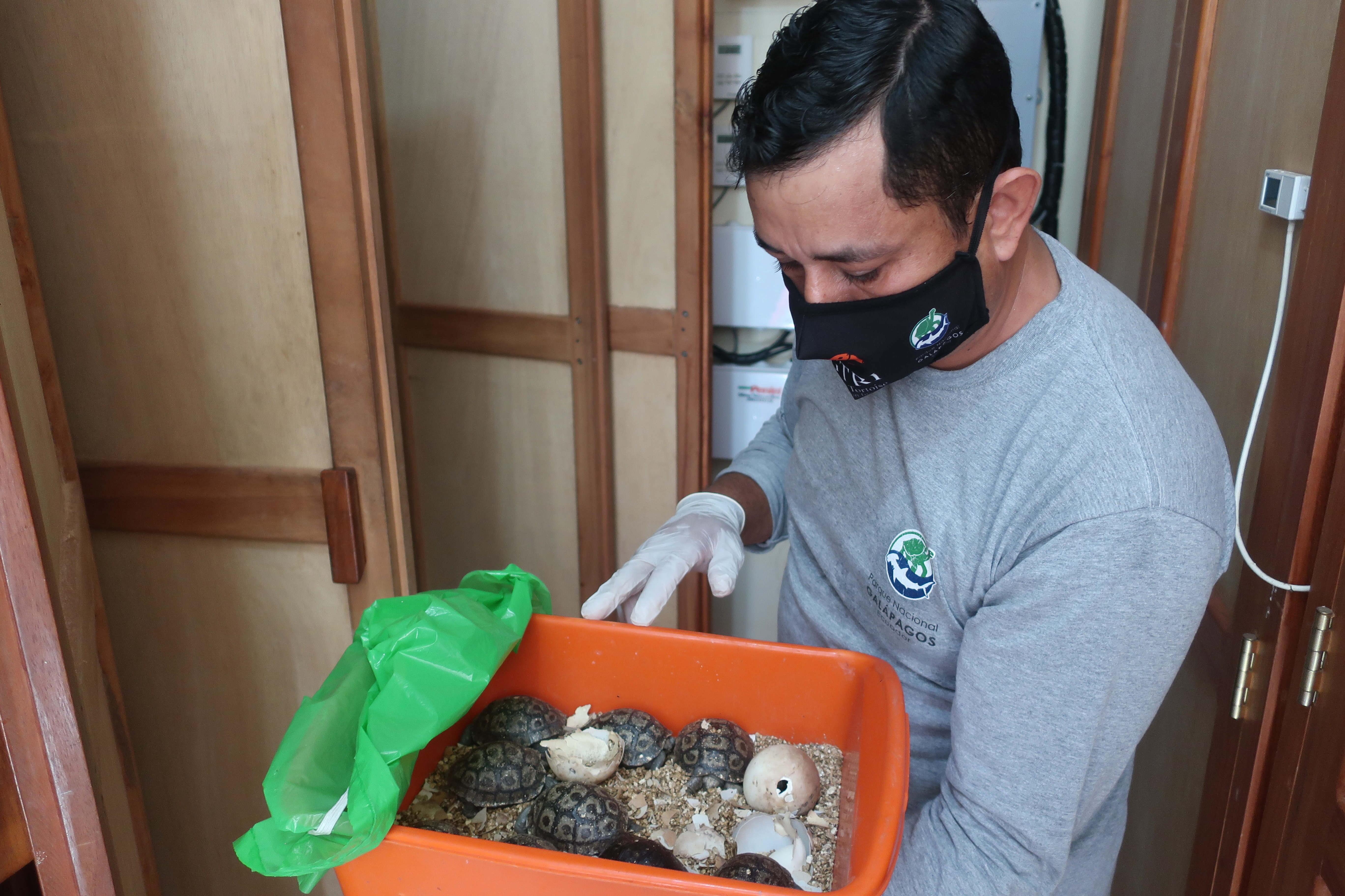 Valiza cu 185 de ţestoase descoperita pe aeroportul din Galapagos