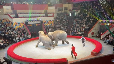 Doi elefanţi au devenit agresivi în timpul unui spectacol de circ