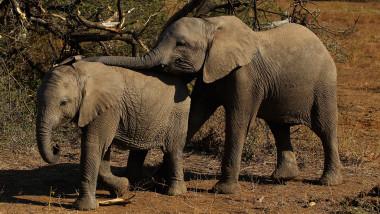 Elefanți în Africa