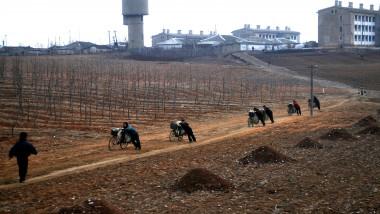 foamete Coreea de Nord