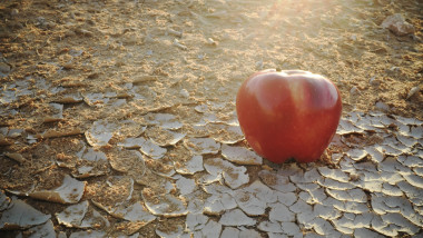 An apple on a dry desert land. Food insecurity, water shortage crisis and desertification concept.