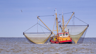 Dutch Shrimp fishing cutter vessel in action