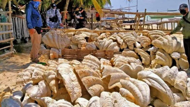 Philippine Coast Guard personnel confiscate endagered giant clam shells