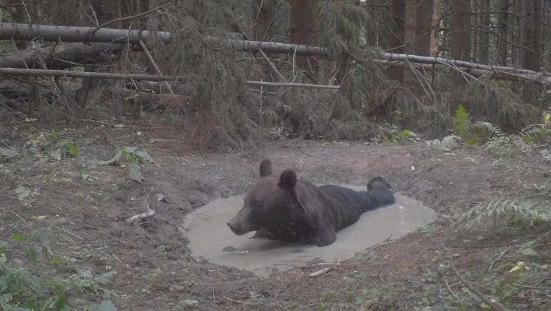 animale salbatice in parcul national ceahlau1