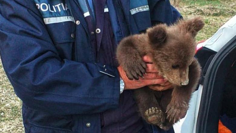 Ursuleț în brațele unui polițist.