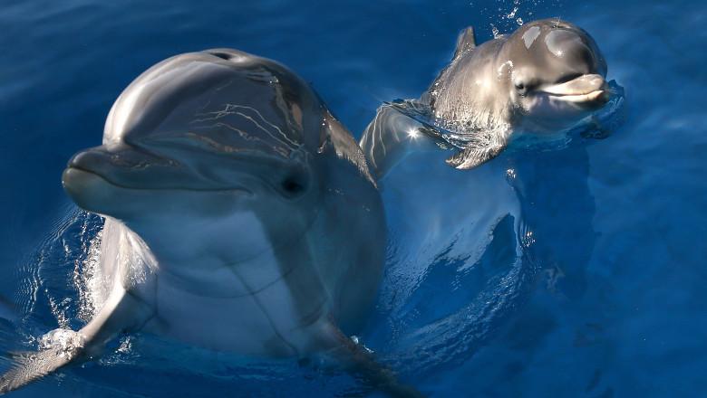delfini gettyimages