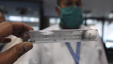 boli tantari malarie