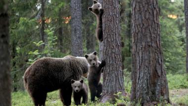 ursoaica pui padure profimedia