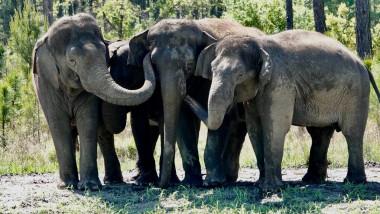 elefanti-florida-facebook4