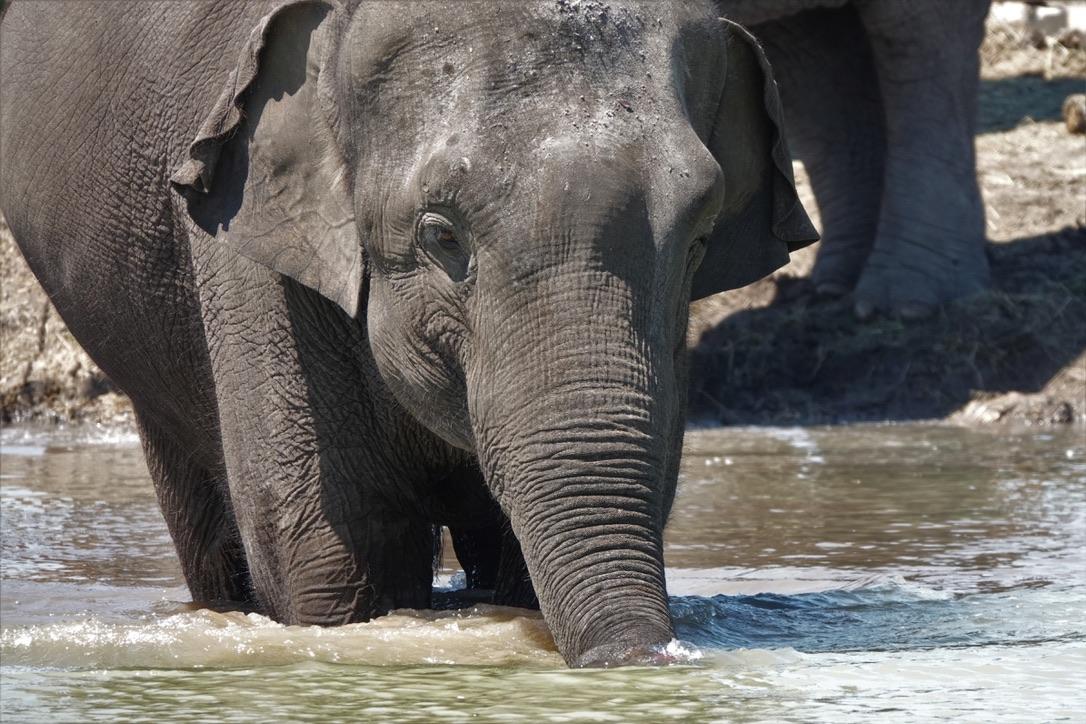 elefanti-florida-facebook