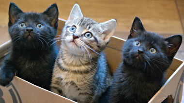 Three Kittens in a Cardboard Box
