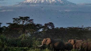 elefanti kenya kilimanjaro profimedia-0598530969