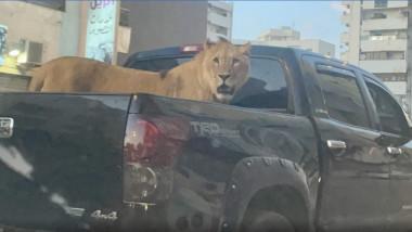 leu in masina in libia - anadolu ajancy