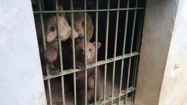 ursi-captivi-zoo-facebook-AMPliberty
