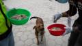 Câine fără stăpân hrănit