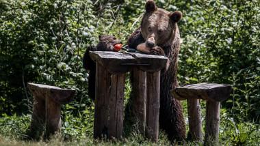 Ursoaică cu pui la Lacul Sf. Ana