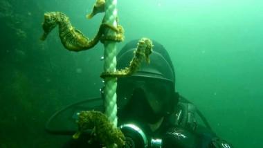 caluti de mare in portul constanta