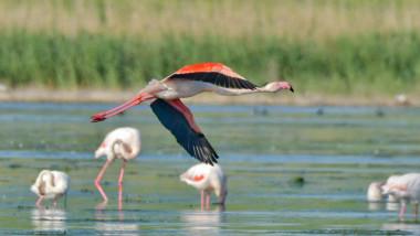flamingo-mihai-baciu-fb