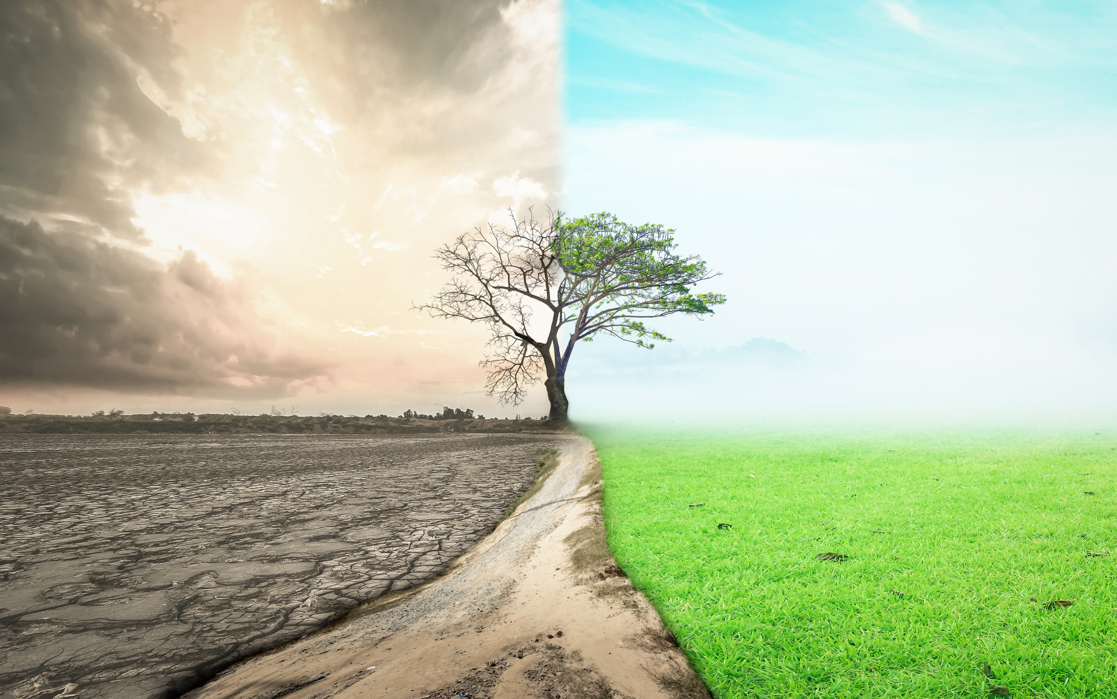 ONU: Natura de pe o suprafata egala cu cea a Chinei trebuie reparata. Degradarea ecosistemelor afecteaza 40% din populatia lumii